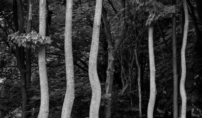 Art Exhibit – Trees by Dennis Dilmaghani