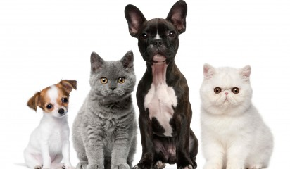 A Dog and Cat Event: Meet & Greet, Adopt, Learn